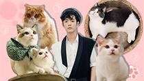 肖戰萌貓抱枕大熱 貓咪令人愛不釋手的原因在哪里?