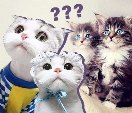 你家貓有哪些奇怪行為?說好的建國以后不能成精呢!